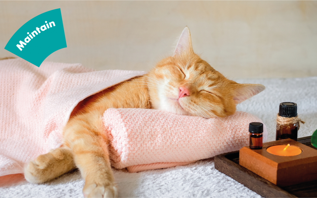 The important role of quality sleep for maintaining oral and general health … and how to make sure you get enough of it!